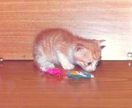 cat101_0