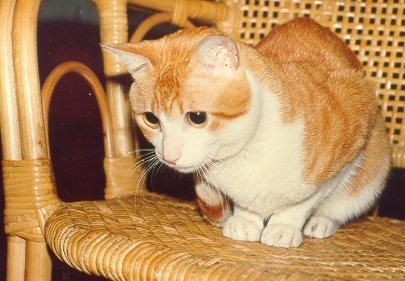 cat119