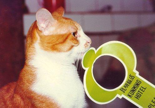 cat120