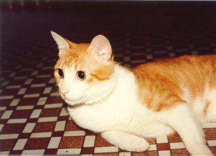 cat122