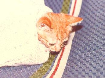 cat203