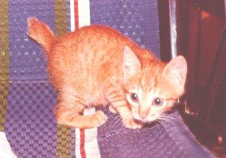cat205