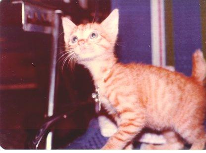 cat208