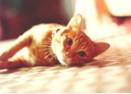 cat210