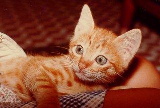 cat213