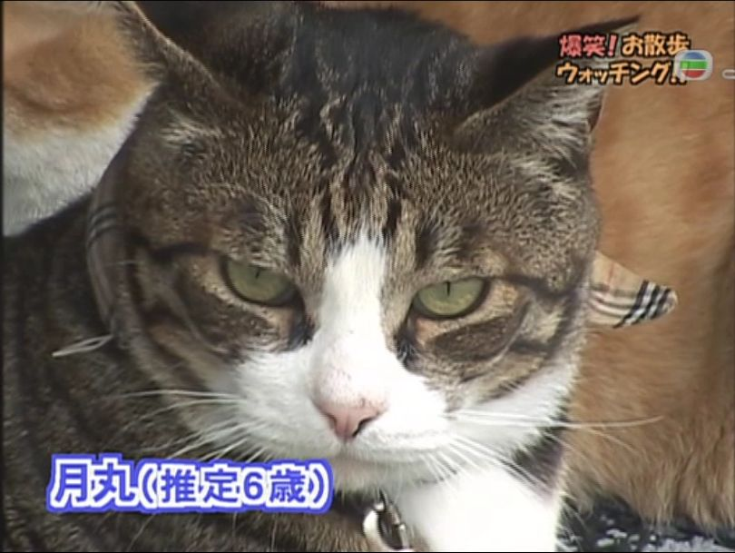 pet_wonderland_cat1