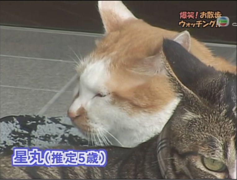 pet_wonderland_cat1_1