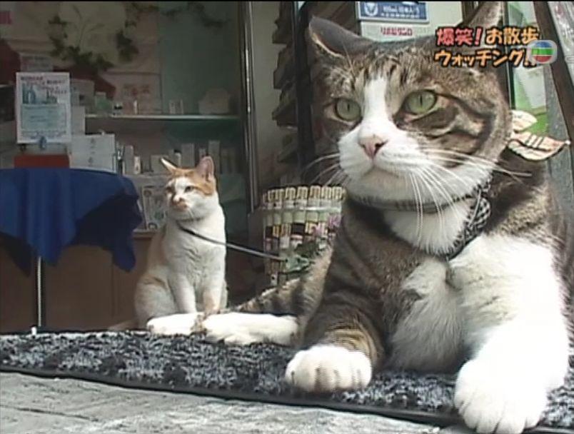 pet_wonderland_cat2