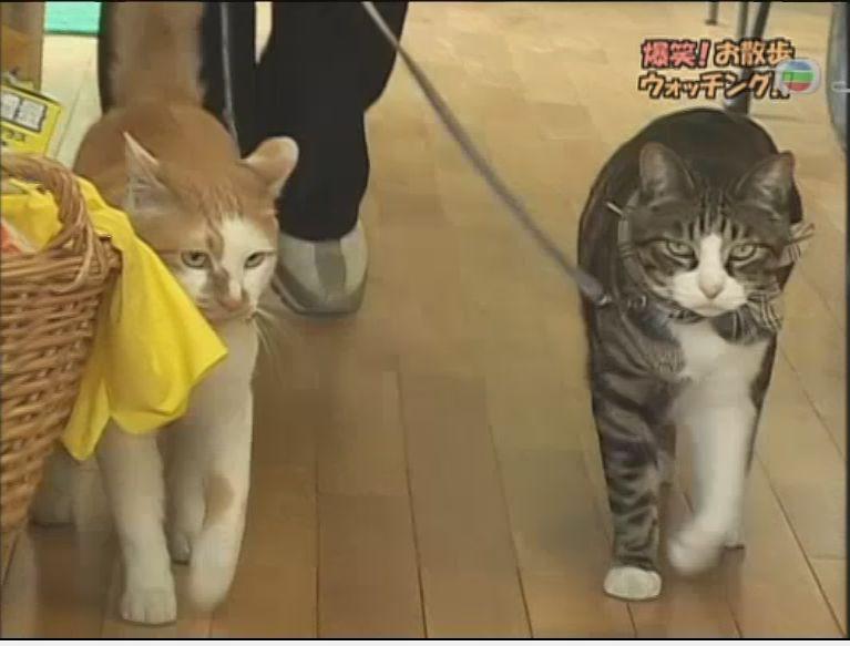 pet_wonderland_cat3