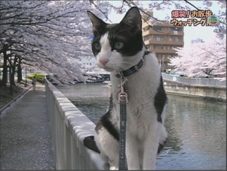 pet_wonderland_cat4
