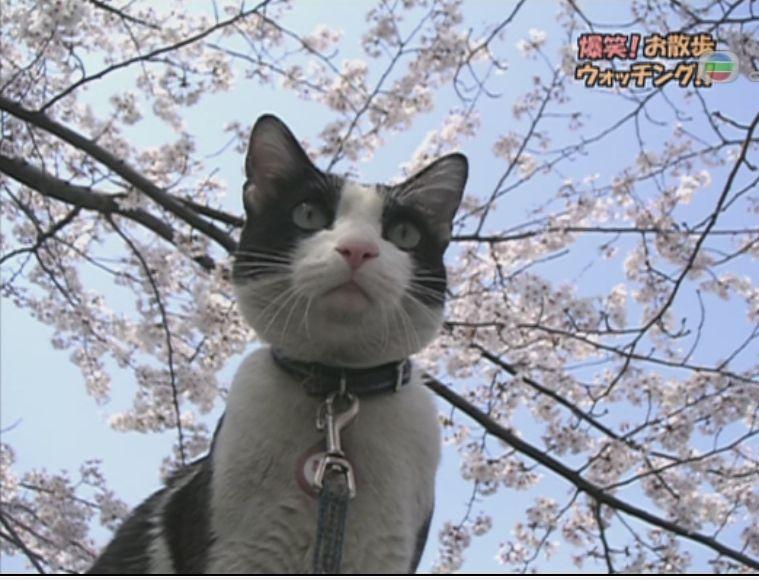 pet_wonderland_cat5