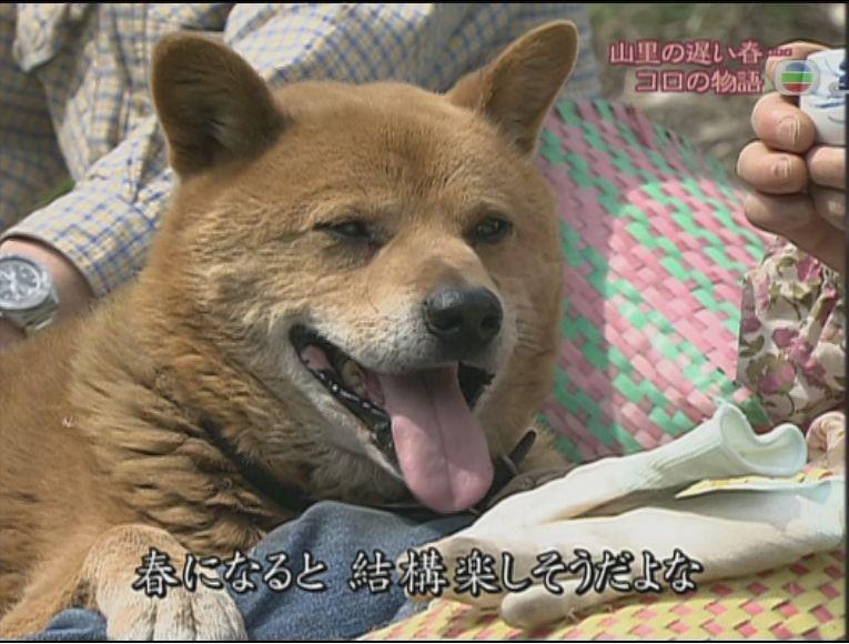 pet_wonderland_dog1_1